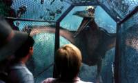 Jurassic Park 3 : image 464520