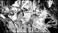 Les Garçons sauvages : image 608094