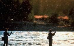Et au milieu coule une rivière : image 81547