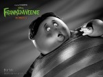 wallpaper  Frankenweenie 391762