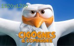 wallpapers Cigognes et compagnie