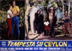 wallpapers Tempête sur Ceylan